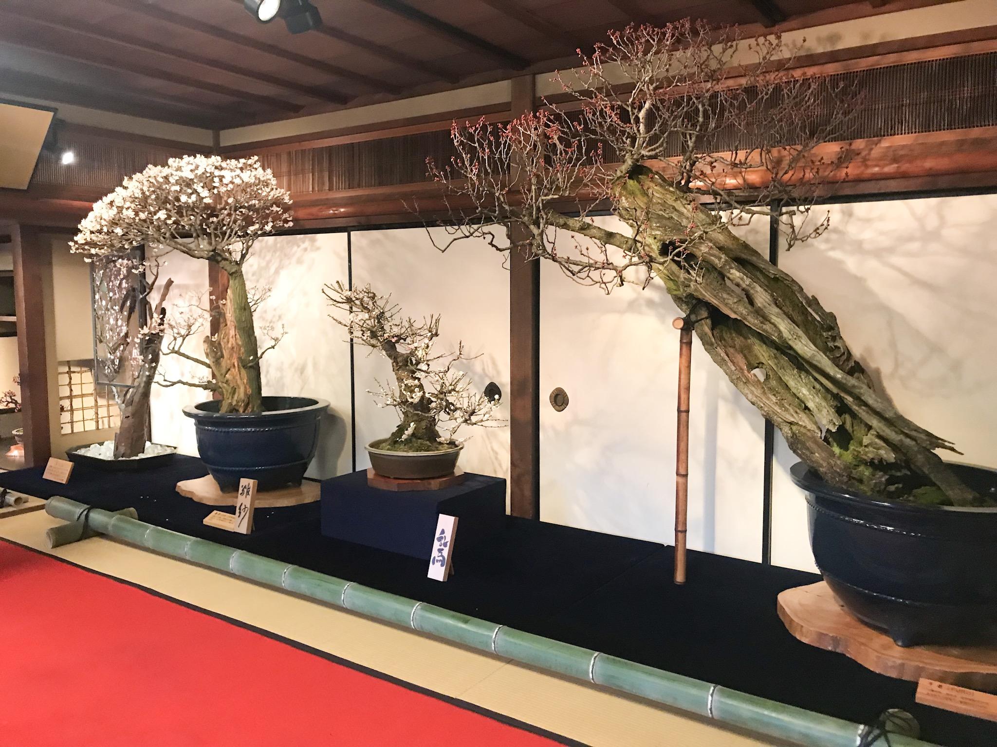 長浜盆梅展2019 会場イメージ