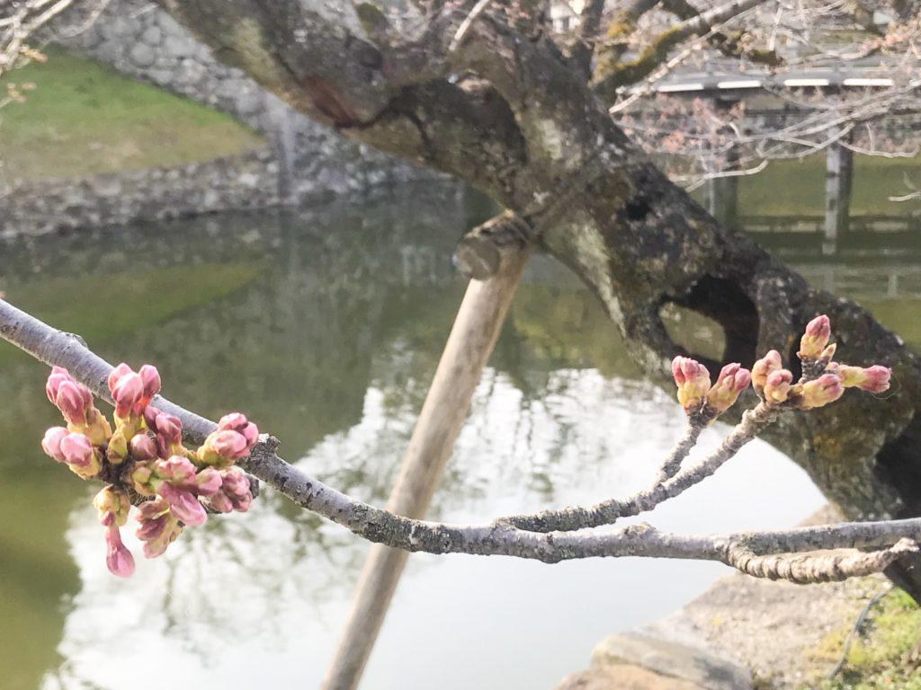 2019.03.29 お城の桜