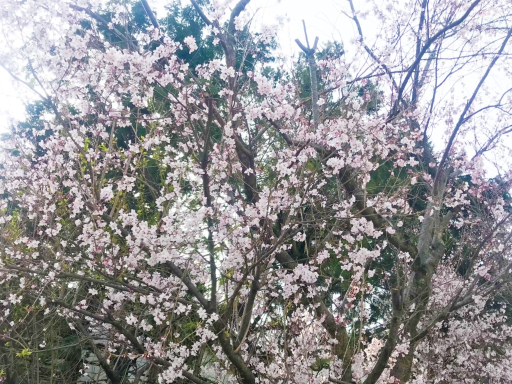 2019.03.29 中央町付近