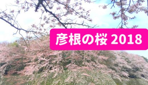 彦根の桜 2018 開花情報【2018.04.05更新】
