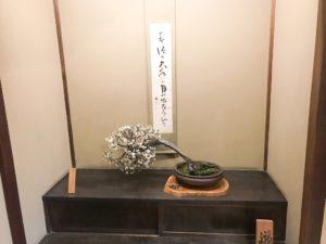 長浜盆梅展2019 展示