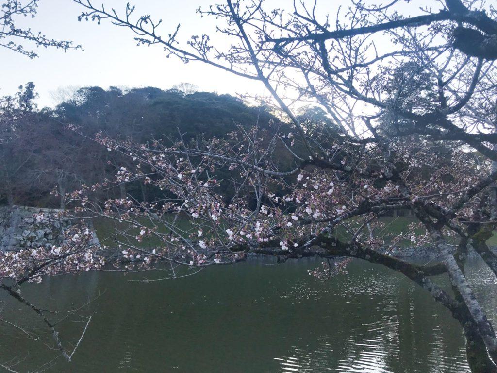 2019.04.04 1部咲