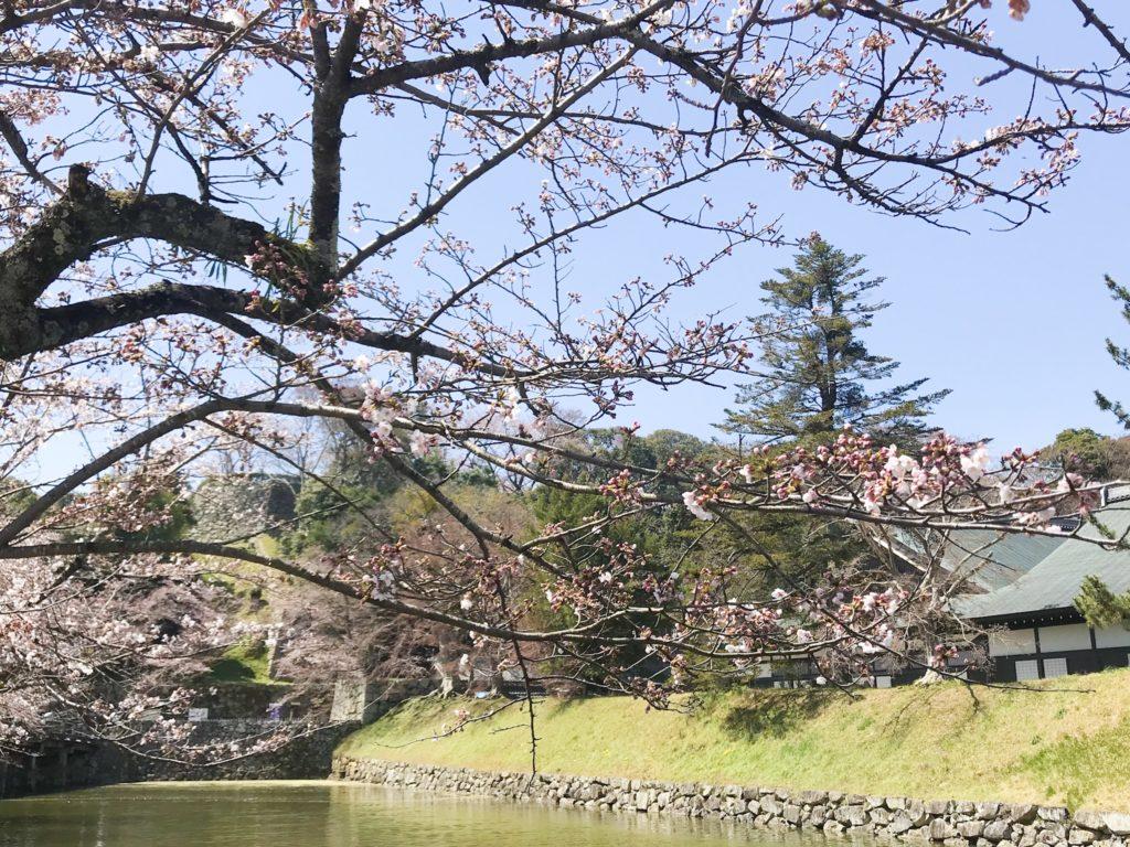 2019.04.05 彦根城の桜