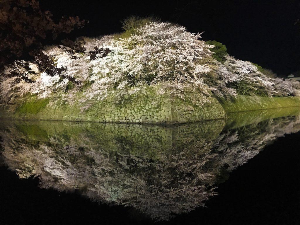2019.04.06 彦根城の夜桜
