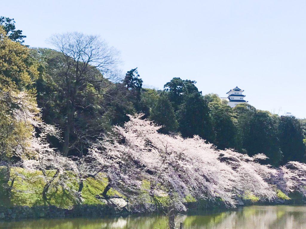 2019.04.08 彦根城の桜