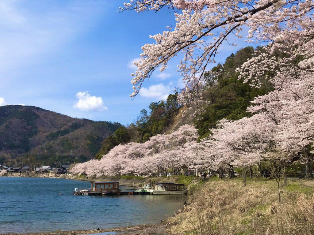 2019海津大崎の桜