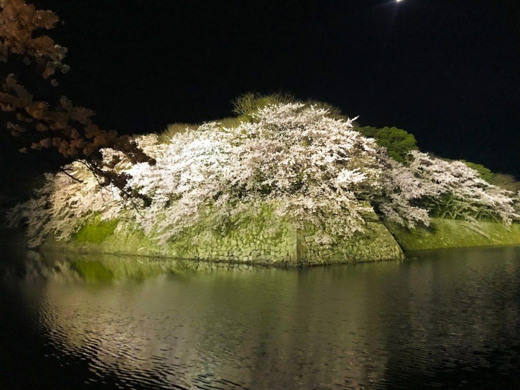 2019.04.12 彦根城の桜