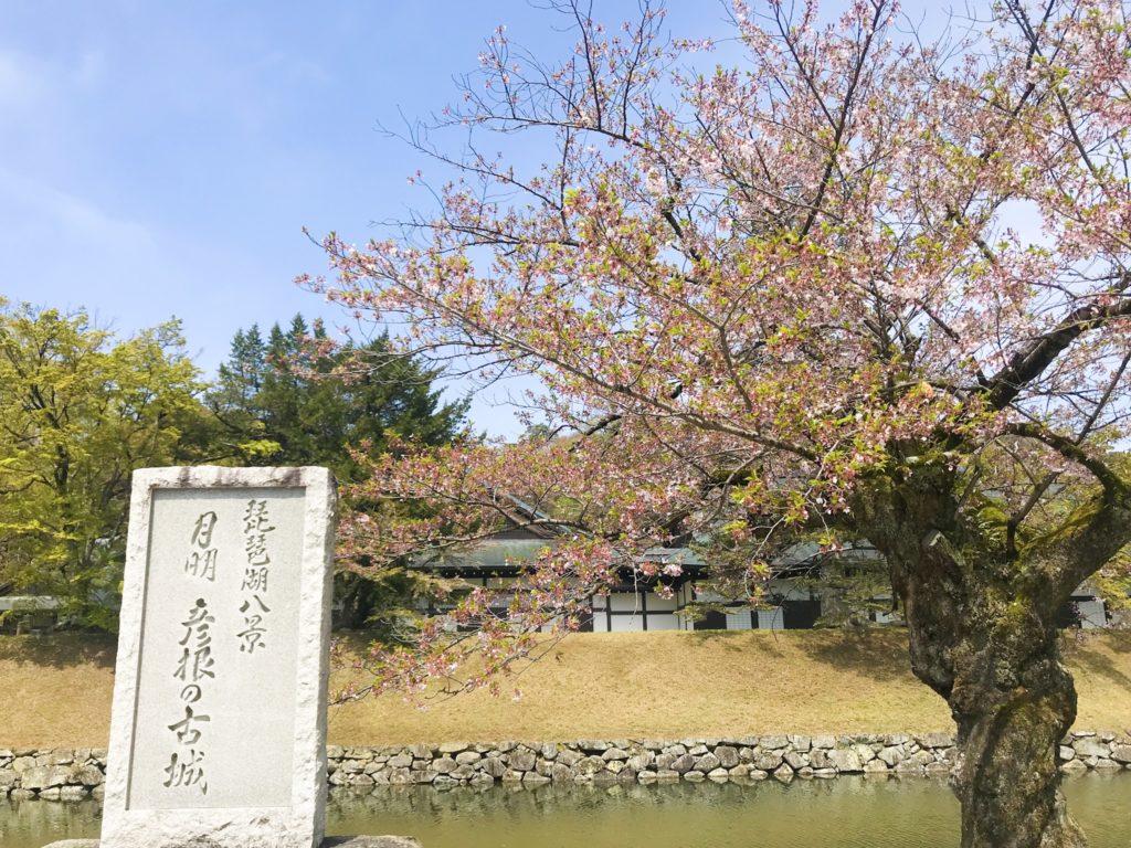 20190418 彦根城の桜