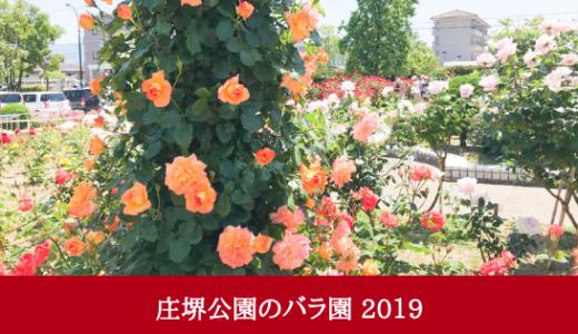 庄堺公園のバラ園2019