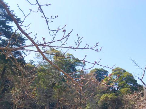20200318の桜