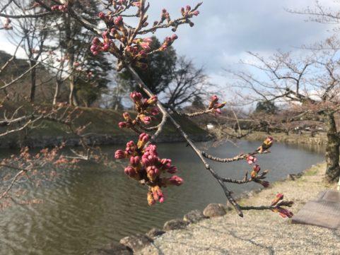 20200324の桜