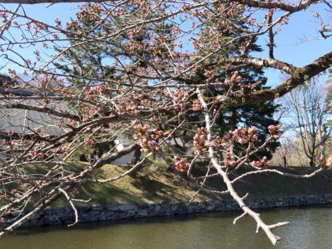 20200325の桜