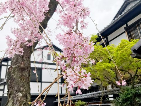 20200331の桜