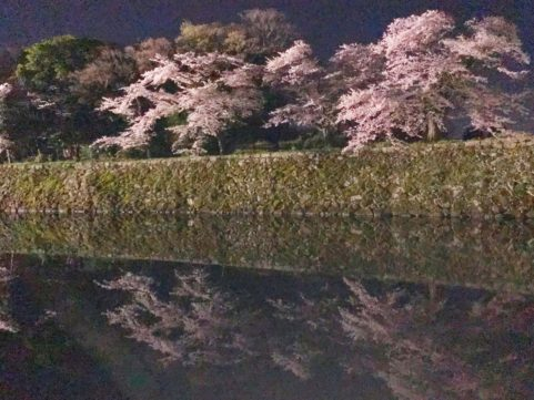 20200407の桜