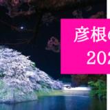 彦根の桜2020